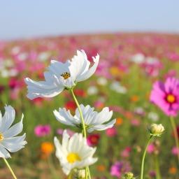 Late Summer Nectar